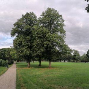 Bäume auf der Hundewiese